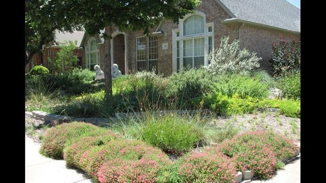 Texas lawmakers propose protection for xeriscaped lawns