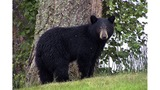 DEC warns homeowners to take down bird feeders to avoid bears